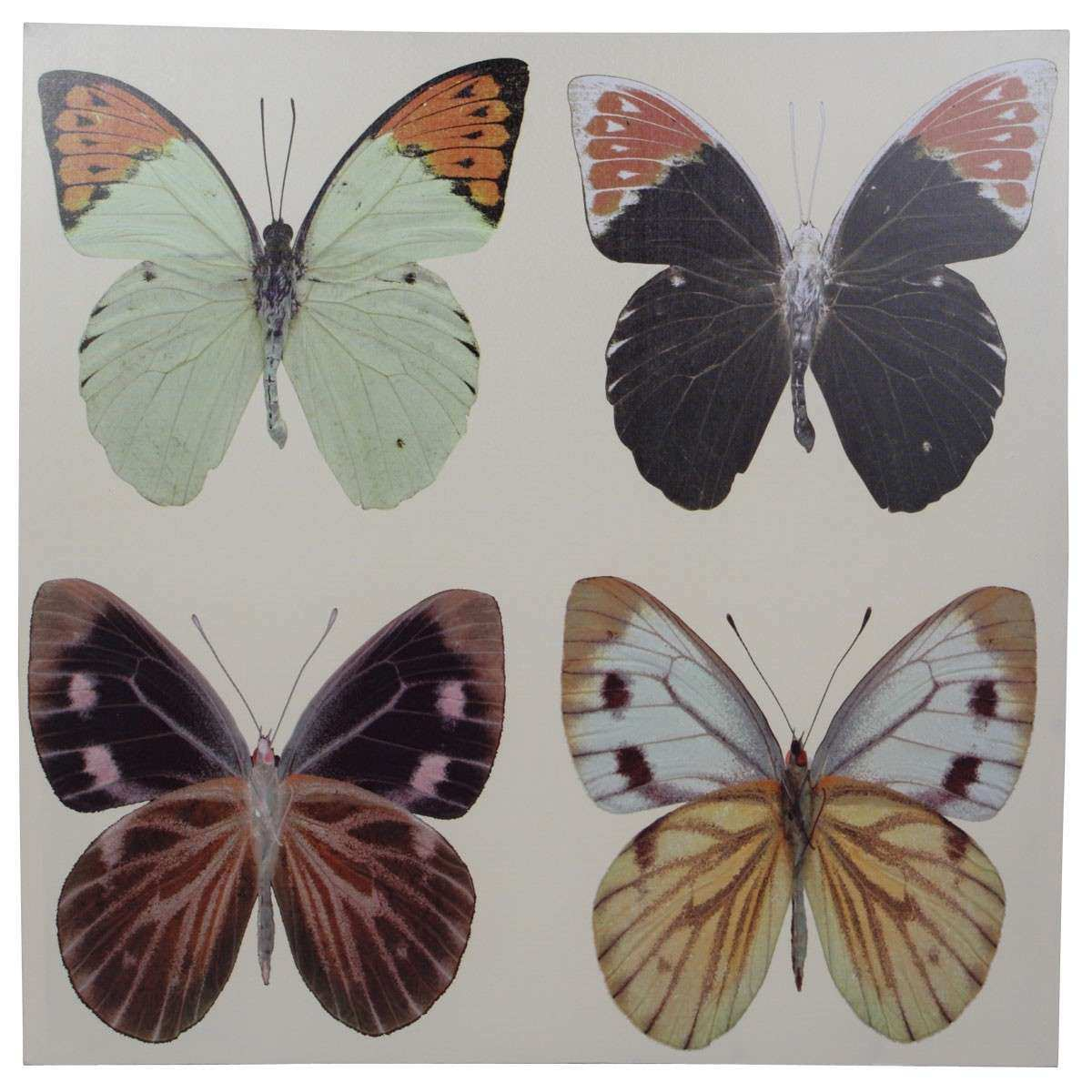 Butterfly Printed Wall Art Canvas