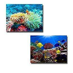 Amazon Canvas Wall Art Coral Reef and Tropical Fish
