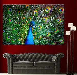 Canvas Giclee Prints Wall Art Peacock Colorful Print