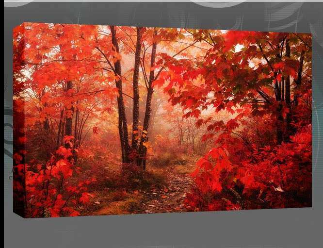 "The Red Leaves of The Autumn Forest Single Canvas 20""x30"