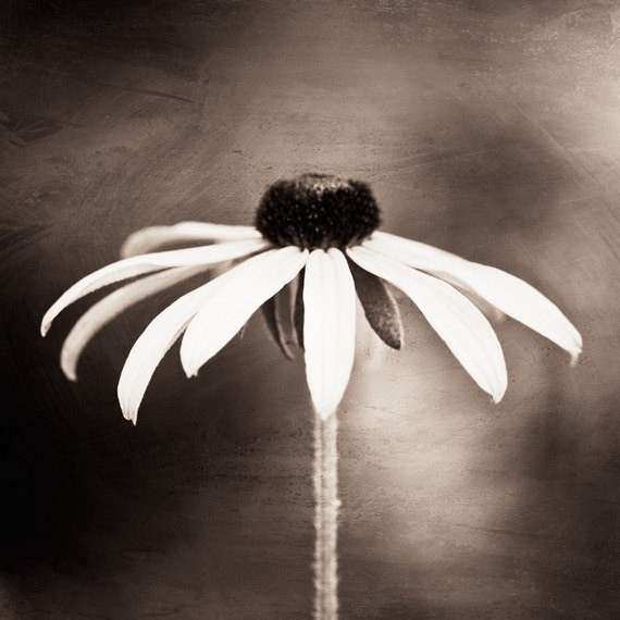Items similar to Fine Art graphy black white sepia