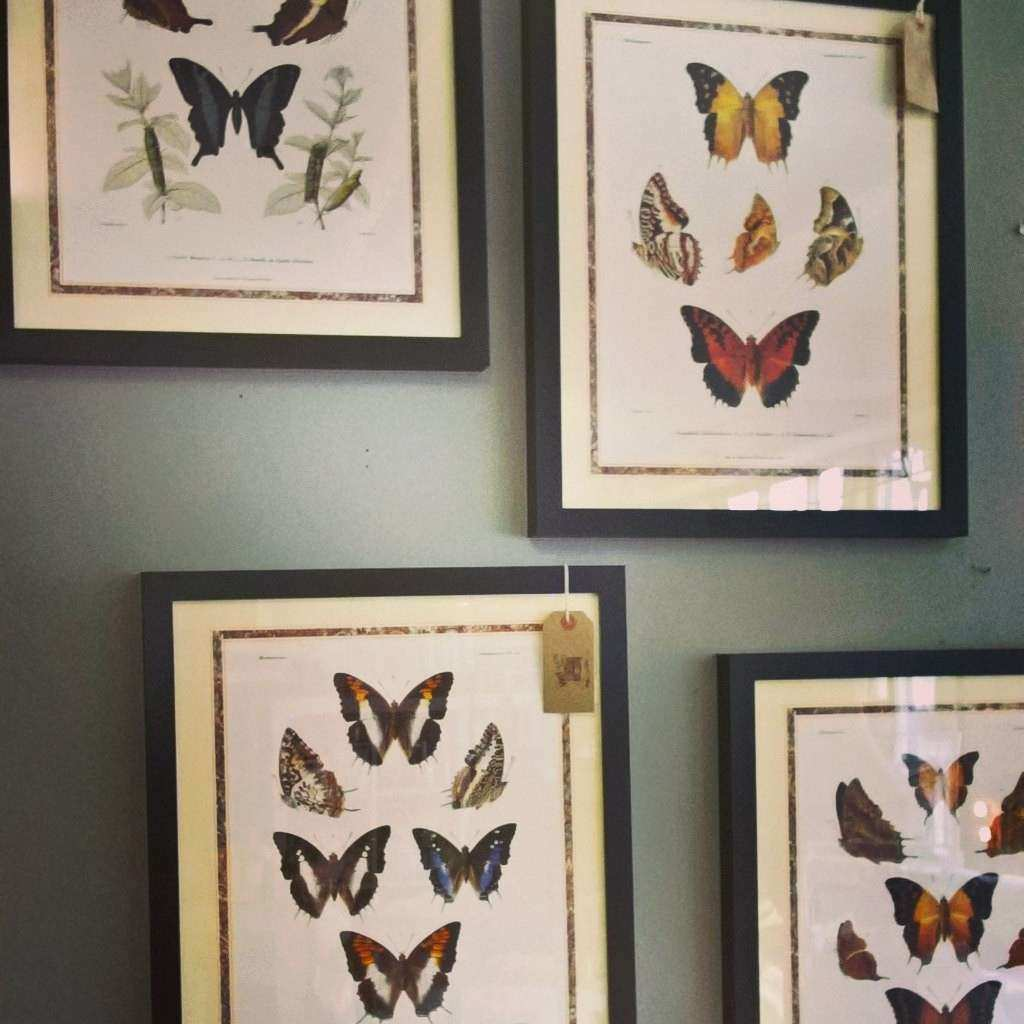 Original Butterfly Study Wall Art Black Framed Butterfly