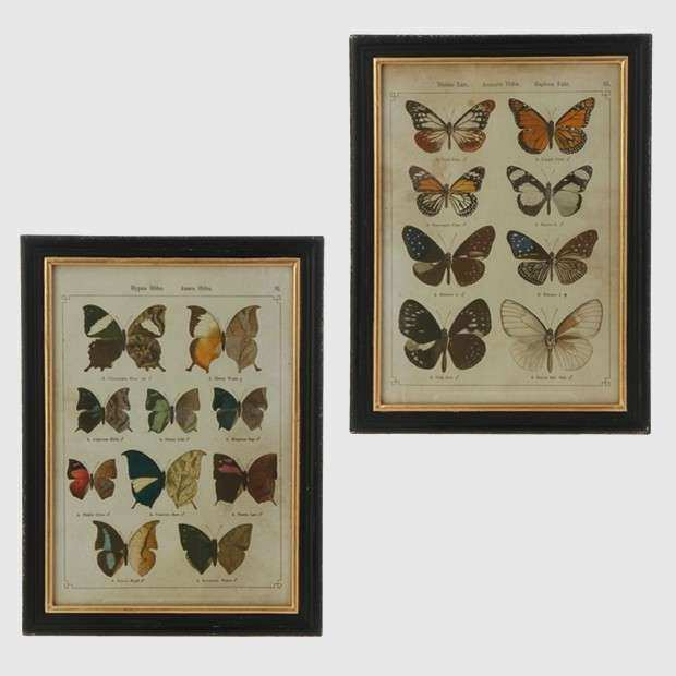 Framed Butterfly Prints Set of 2