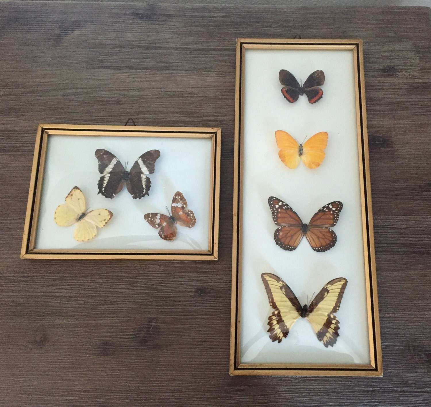 Butterfly Wall Art Fresh butterfly Wall Art Framed Curved Glass Mounted butterflies