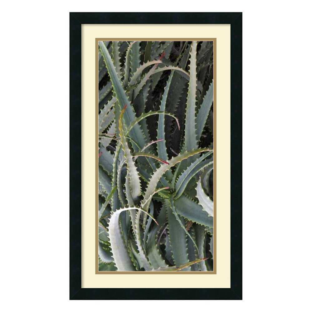 Amanti Art DSW Prickly Cactus Framed Art Print