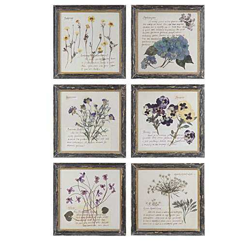 Pressed Flower Wall Prints from Creative Co op