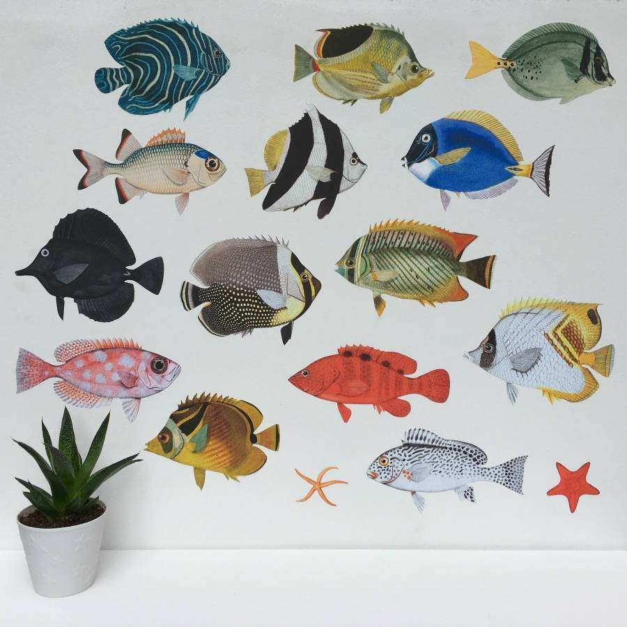 Fish Wall Art Inspirational Tropical Fish Aquarium Wall Sticker Set by Chameleon Wall  sc 1 st  Emily Garrison & Fish Wall Art Inspirational Tropical Fish Aquarium Wall Sticker Set ...