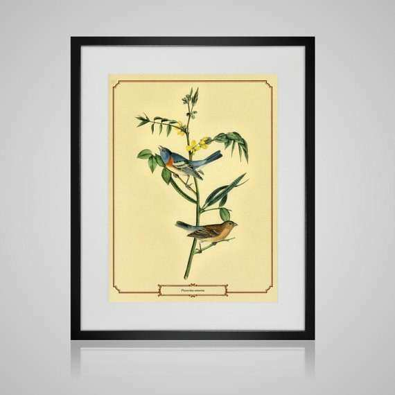 Framed Wall Art VINTAGE BIRD PRINT Free by PictureByPicture