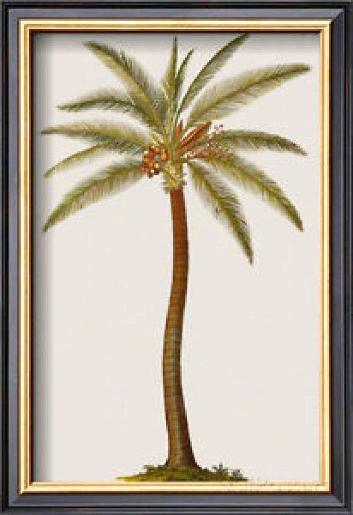 Picture Frames Palm Tree Framed Palm Tree Sunset