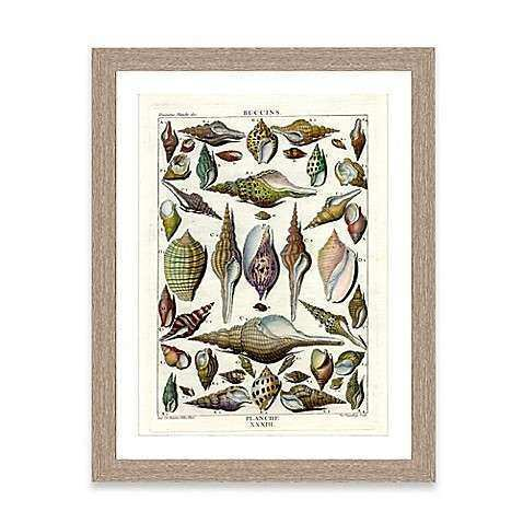 Buy Framed Giclée Shell Collage Print II Wall Art from Bed