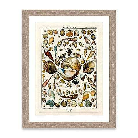Buy Framed Giclée Shell Collage Print I Wall Art from Bed