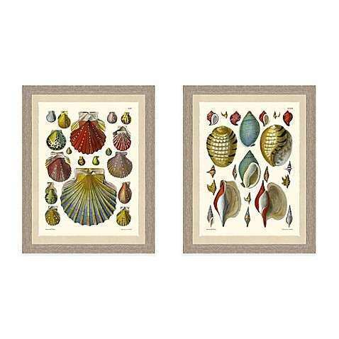 Colored Shell Giclée Framed Wall Art Collection Bed Bath
