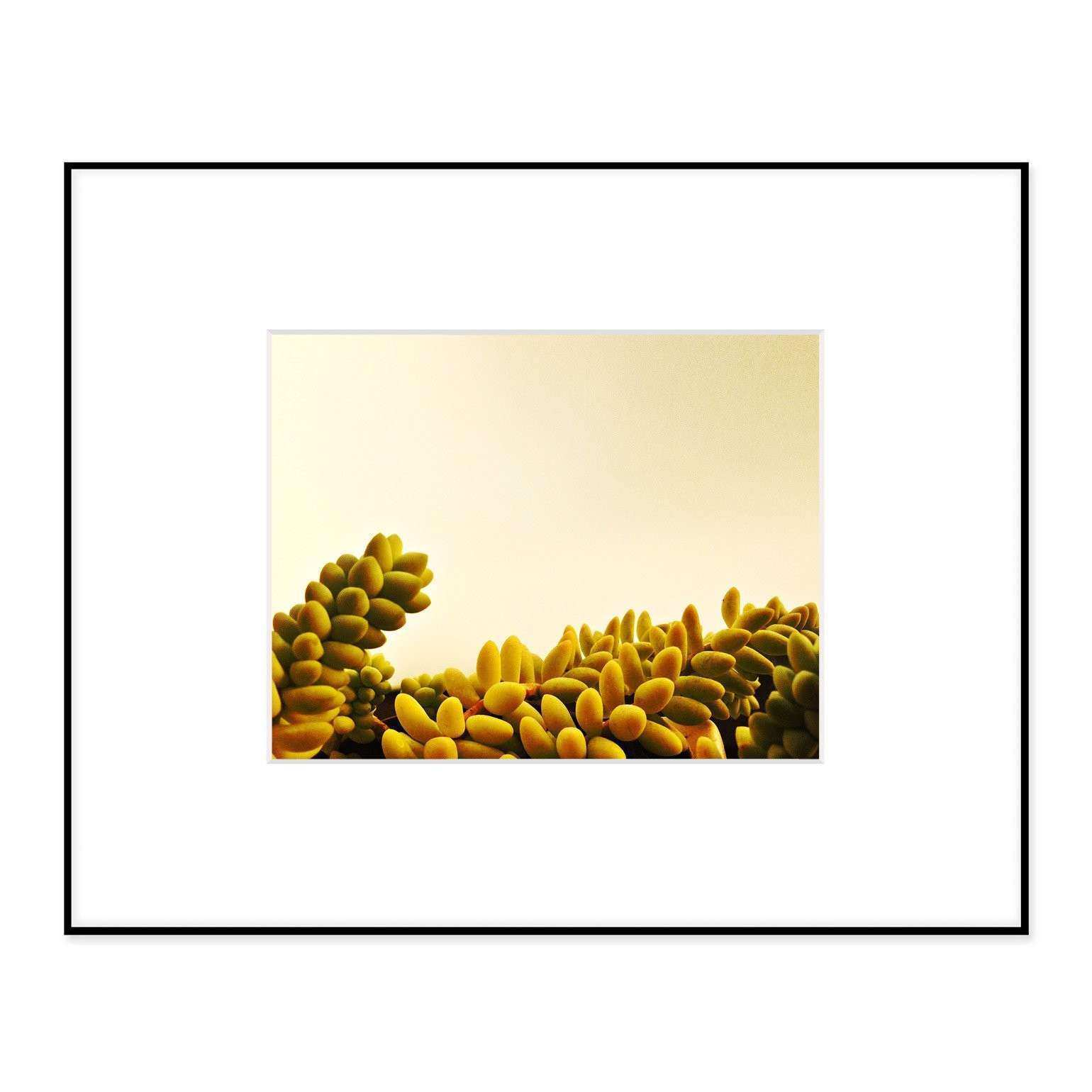 Frosted Succulent Framed Wall Art – Hip