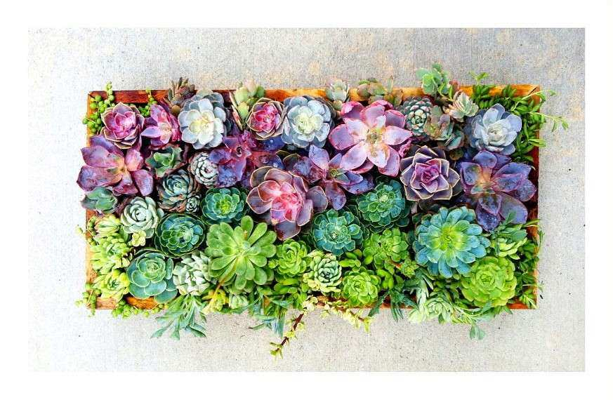 Etsy Succulent Wall Art thousands of images about framed