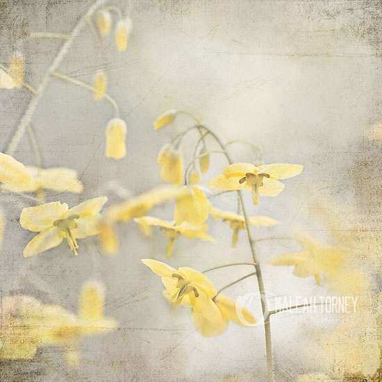 Yellow Flowers graphy Yellow & Grey Wall Art Spring