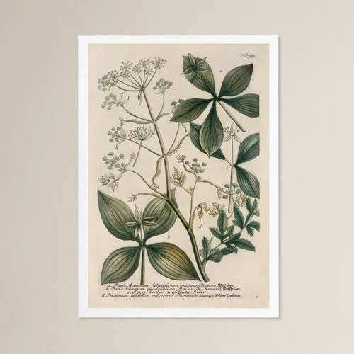 Herb Wall Art Unique Herbs Framed Graphic Art
