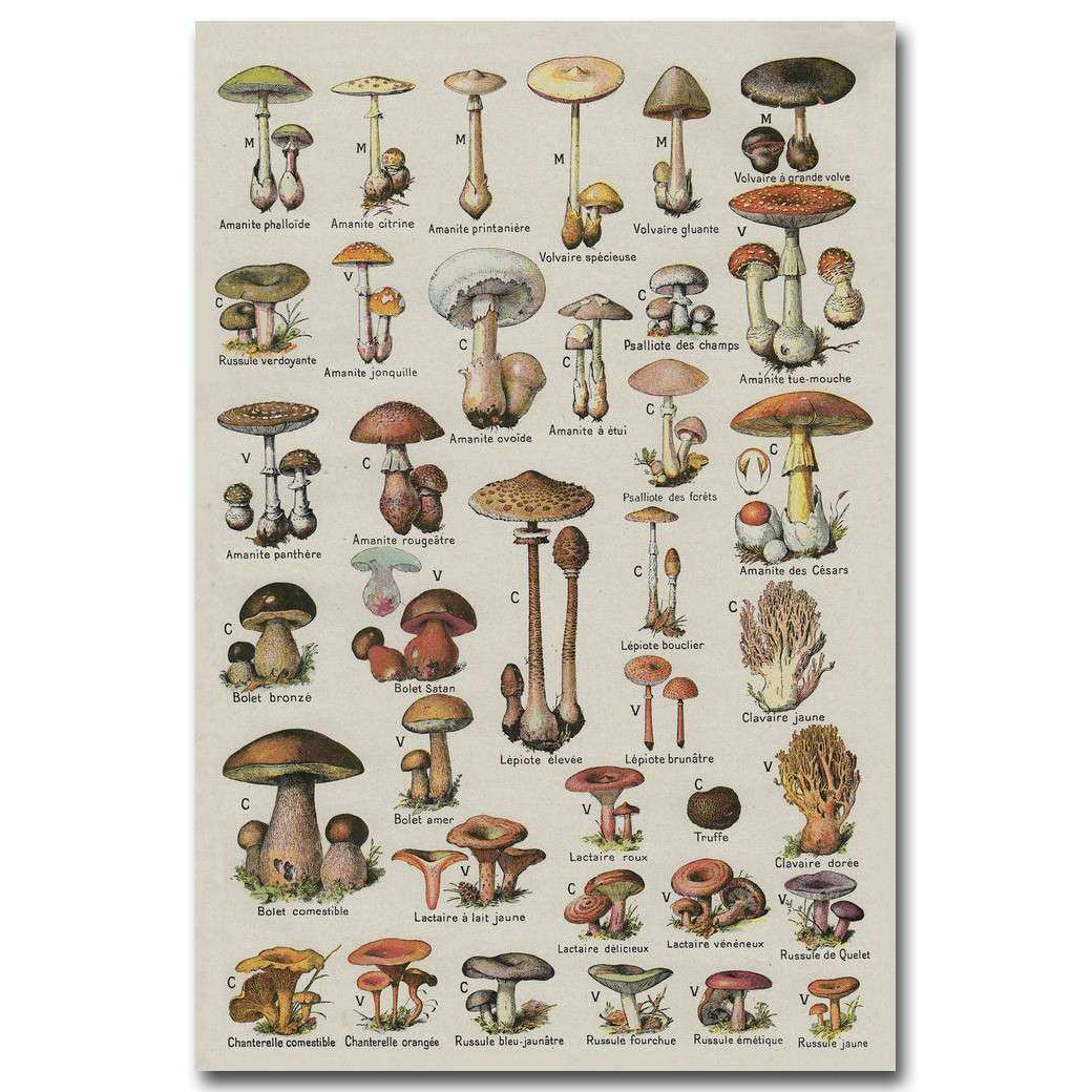 Mushroom Chart Science Art Silk Poster Fabric Print 12x18