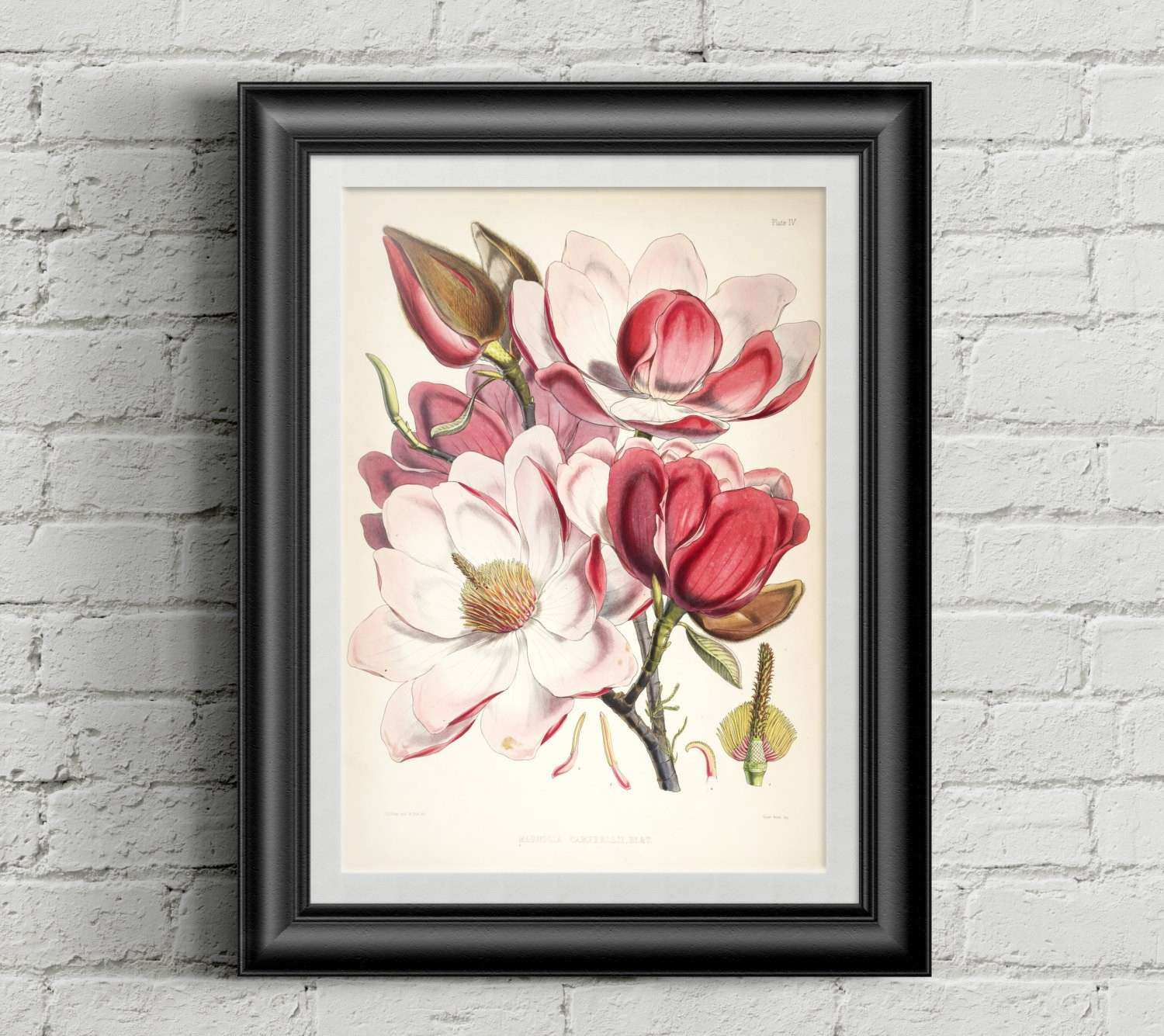 Magnolia Wall Decor Best Of Magnolia Botanical Art Print Wall Art Print Vintage  sc 1 st  Emily Garrison & Magnolia Wall Decor Best Of Magnolia Botanical Art Print Wall Art ...