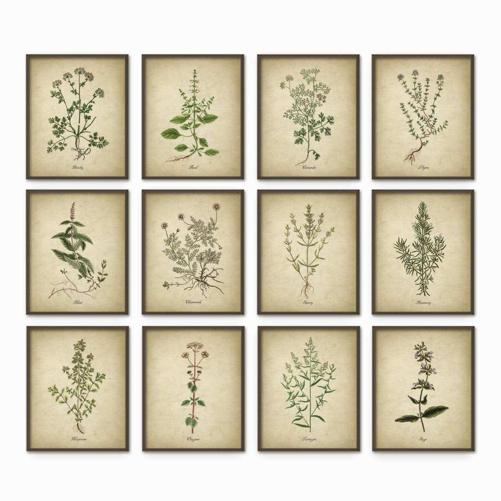 Kitchen Herbs Wall Art Print Set of 12 Vintage Botanical
