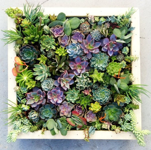 Lovely Succulent Wall Decor Elegant Wall Art