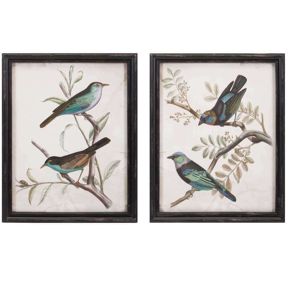 Framed Bird Prints Set of 2 in Wall Decor