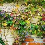 Wall Pictures With Flowers Best Of Leaves Ivy Wall Autumn Flowers Paint Picture Hd Wallpaper Of Wall Pictures With Flowers