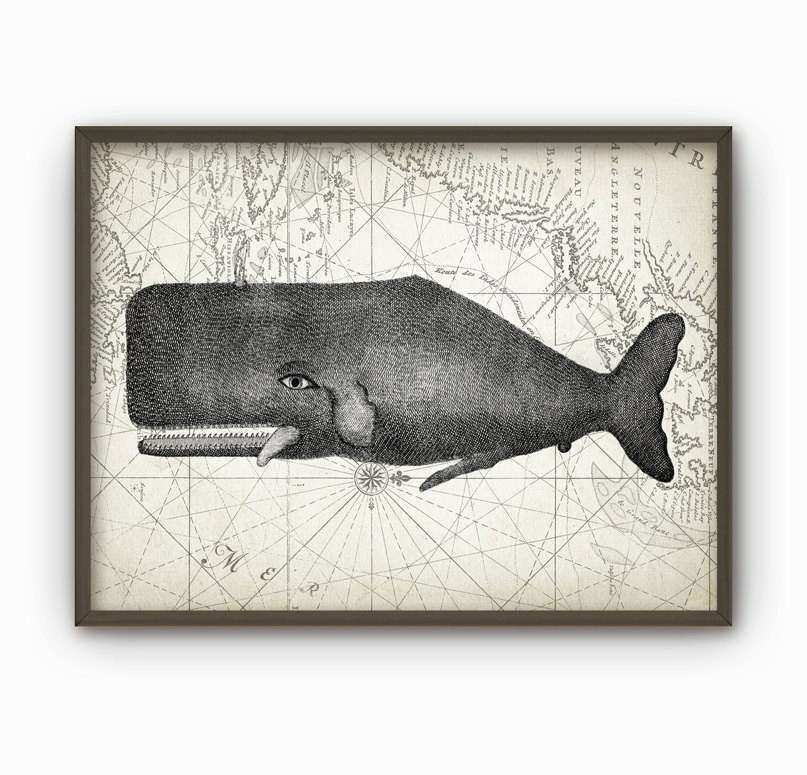 Whale Wall Art Poster Marine Biology Print Whale Chart