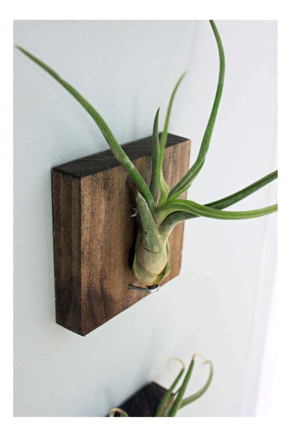 Items similar to Mounted Air Plant Wall Decor Medusa s