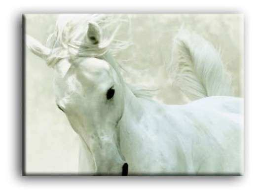 Silver Lady White Horse Portrait Wall Art Picture Print