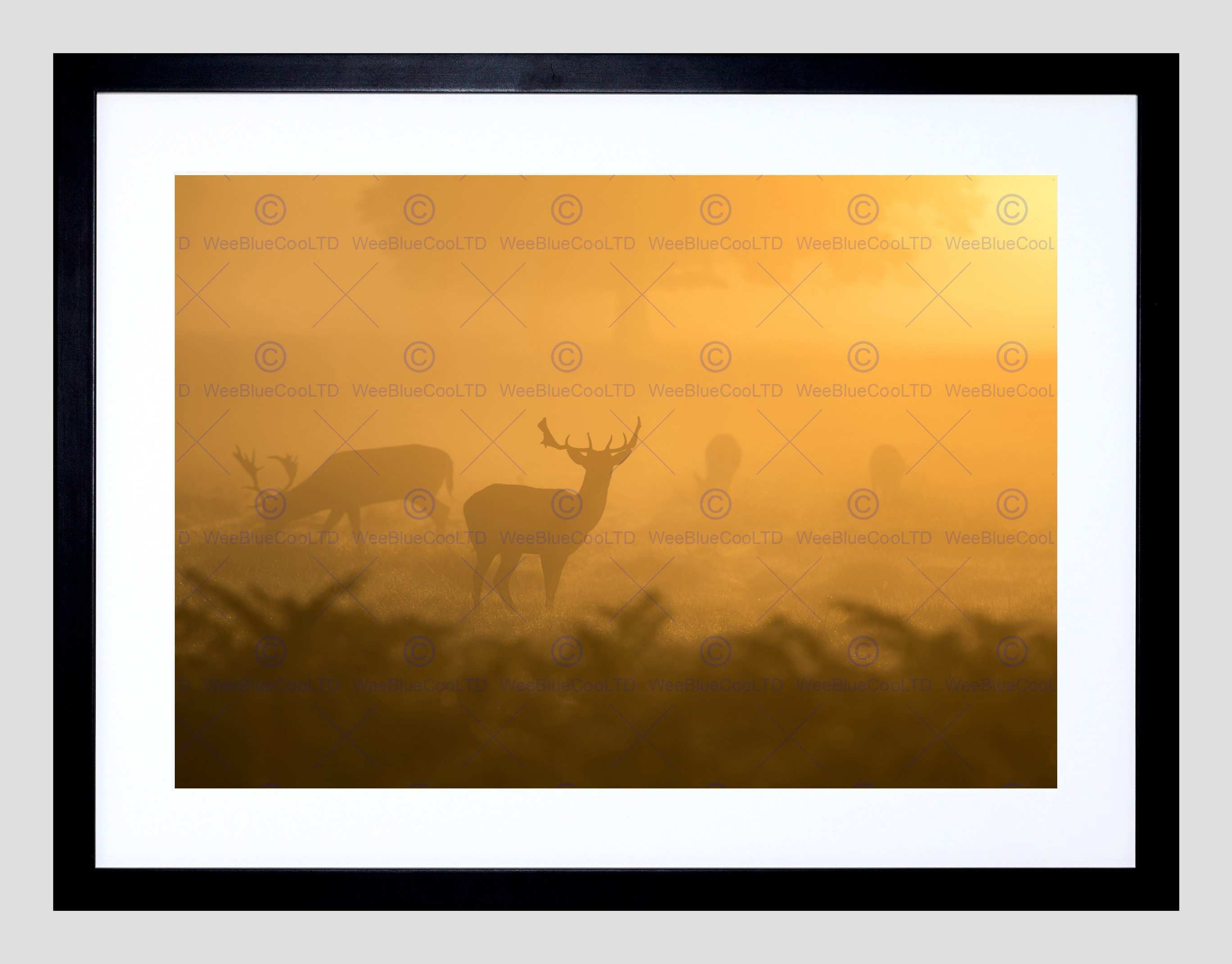 ANIMAL DEER MIST STAG FRAMED ART PRINT POSTER PICTURE WALL F12X