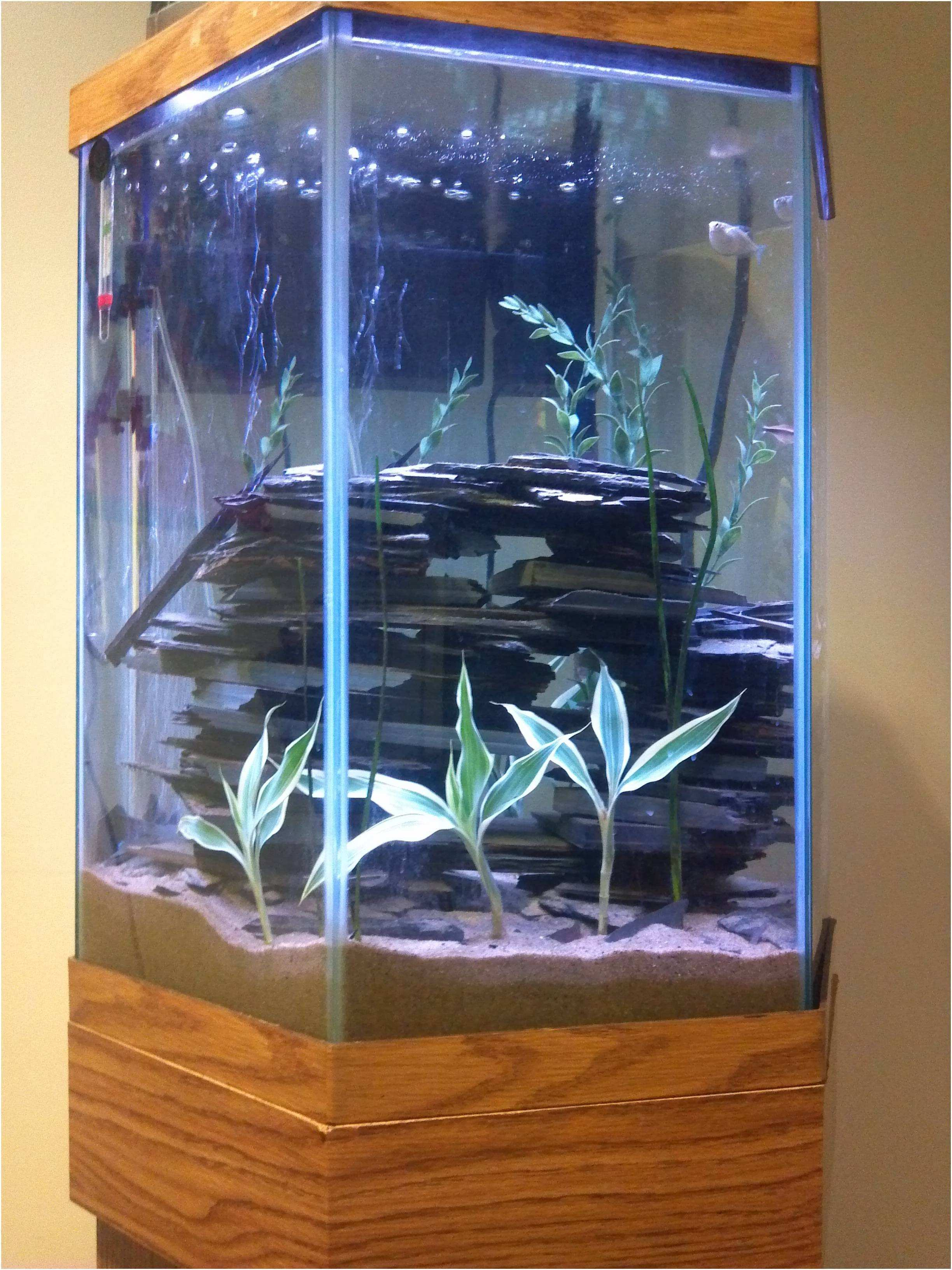 Home Design Tall Fish Tank Inspirational Tall Low Light Aquarium