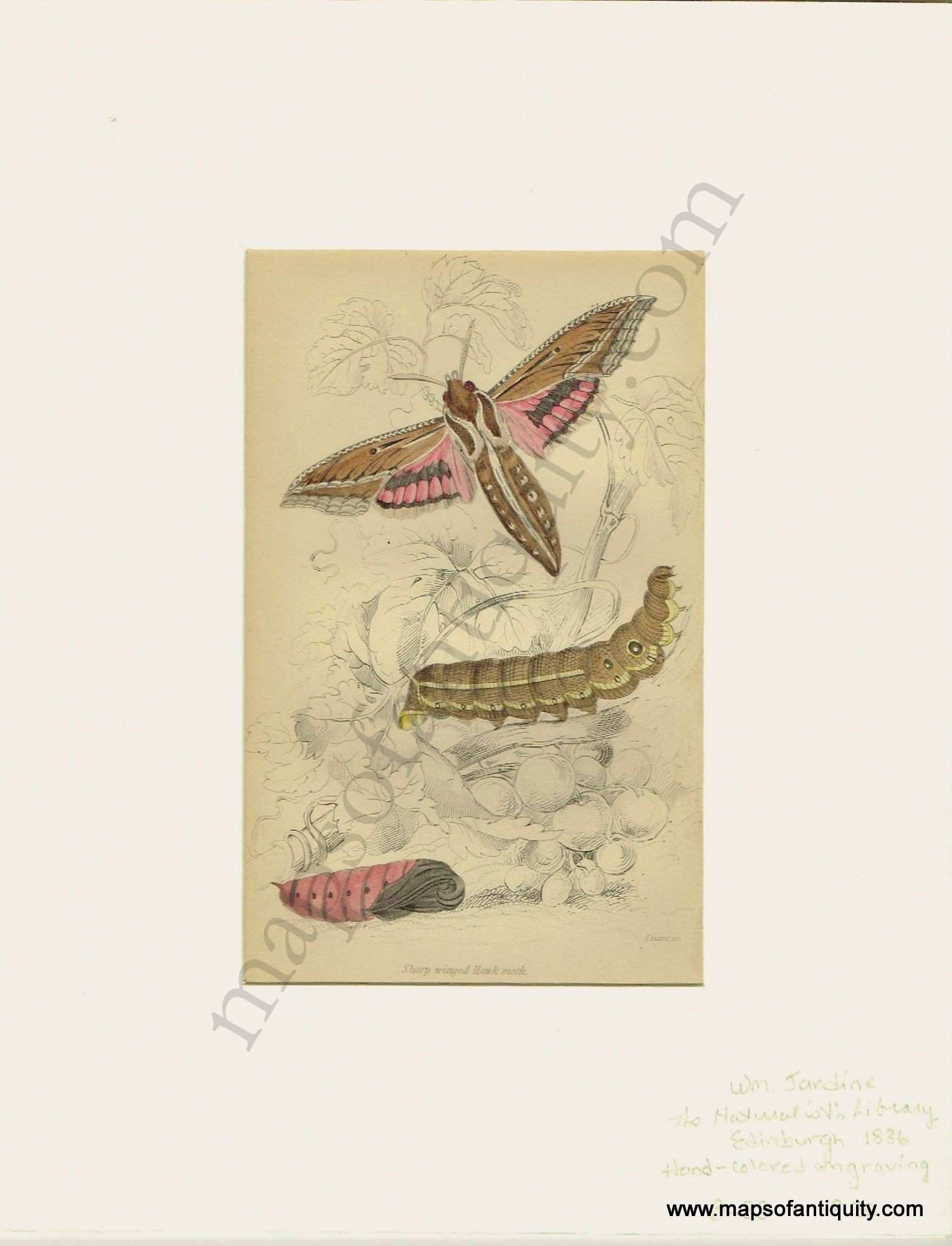 Art Prints Reproductions Luxury Sharp Winged Hawk Moth Plate 10 Antique Maps and Charts