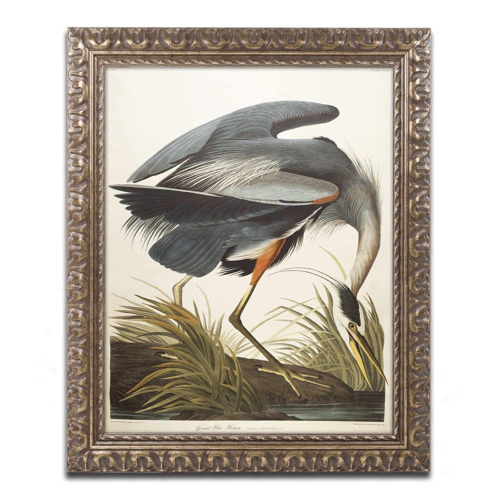Great Blue Heron by John James Audubon Framed Painting Print