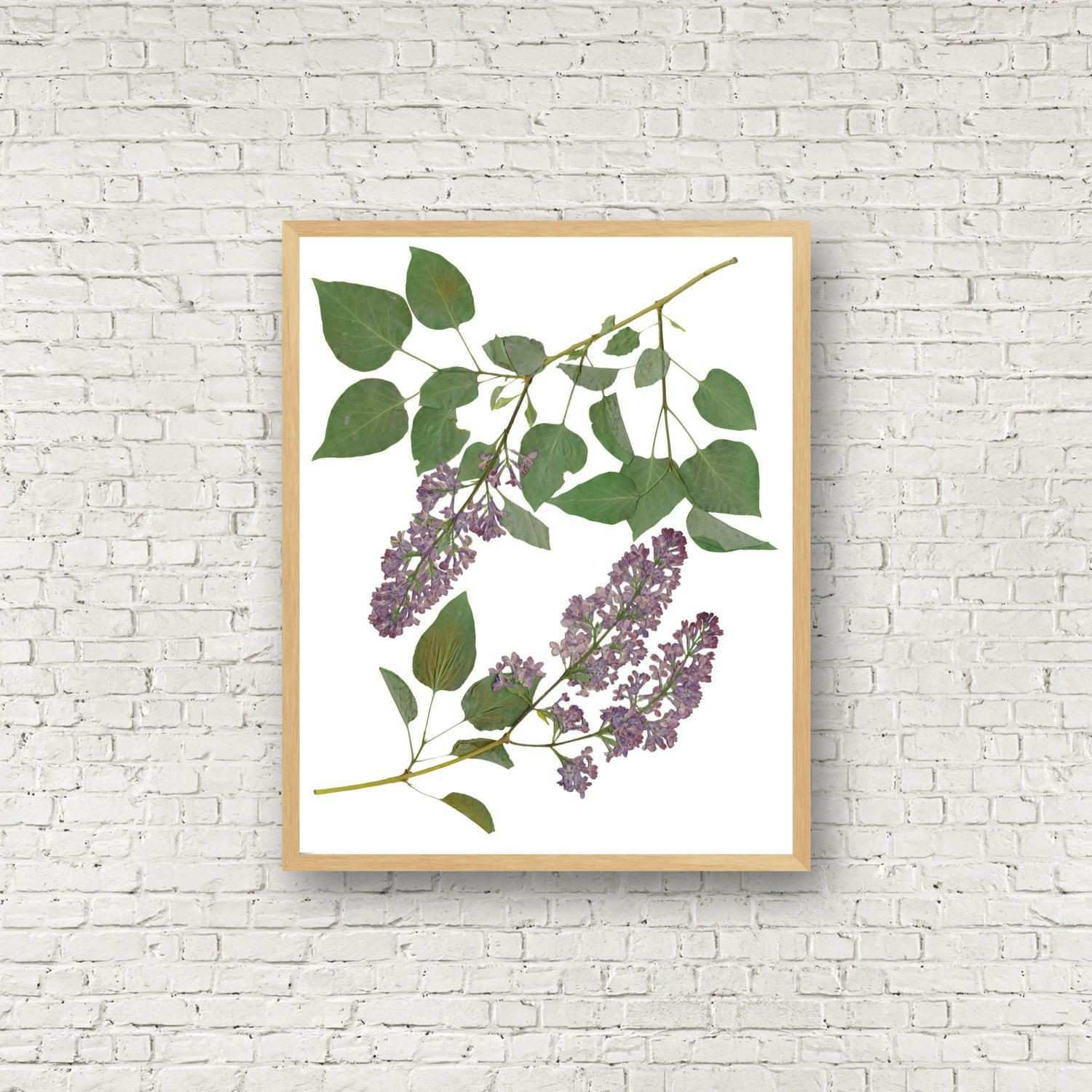 Botanical Art Prints Inspirational Lilac Botanical Print Spring Flower Pressed Plant Botanical
