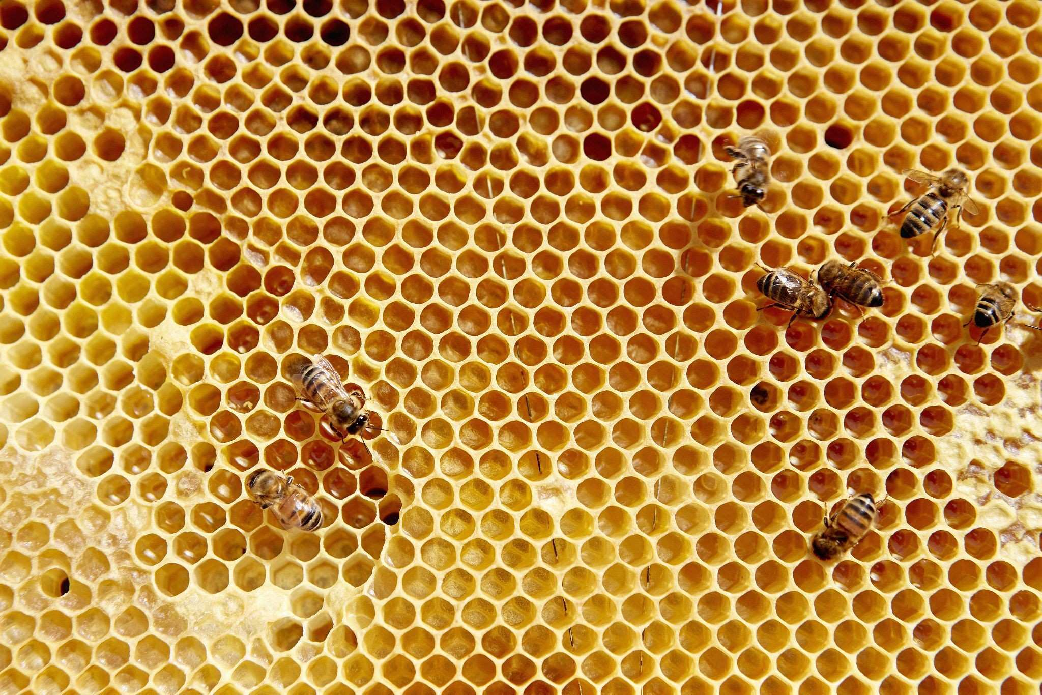 A wooden frame with honey b pattern with a small number of bees