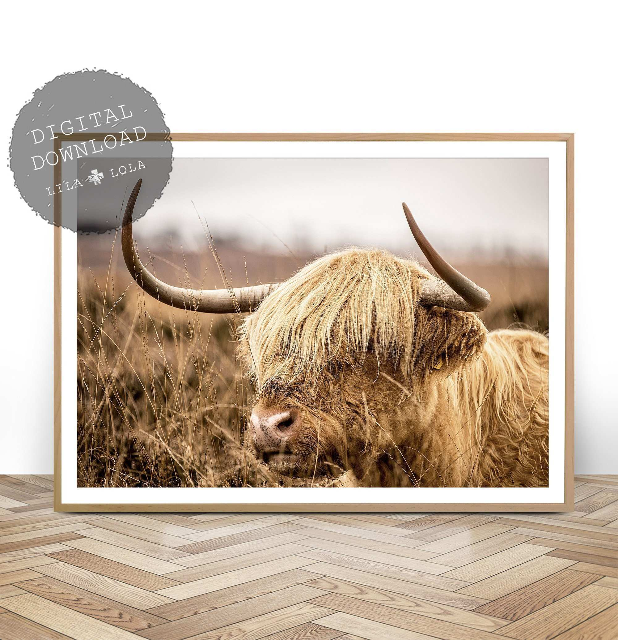 Highland Cow Print Digital Download Highland Cow graphy
