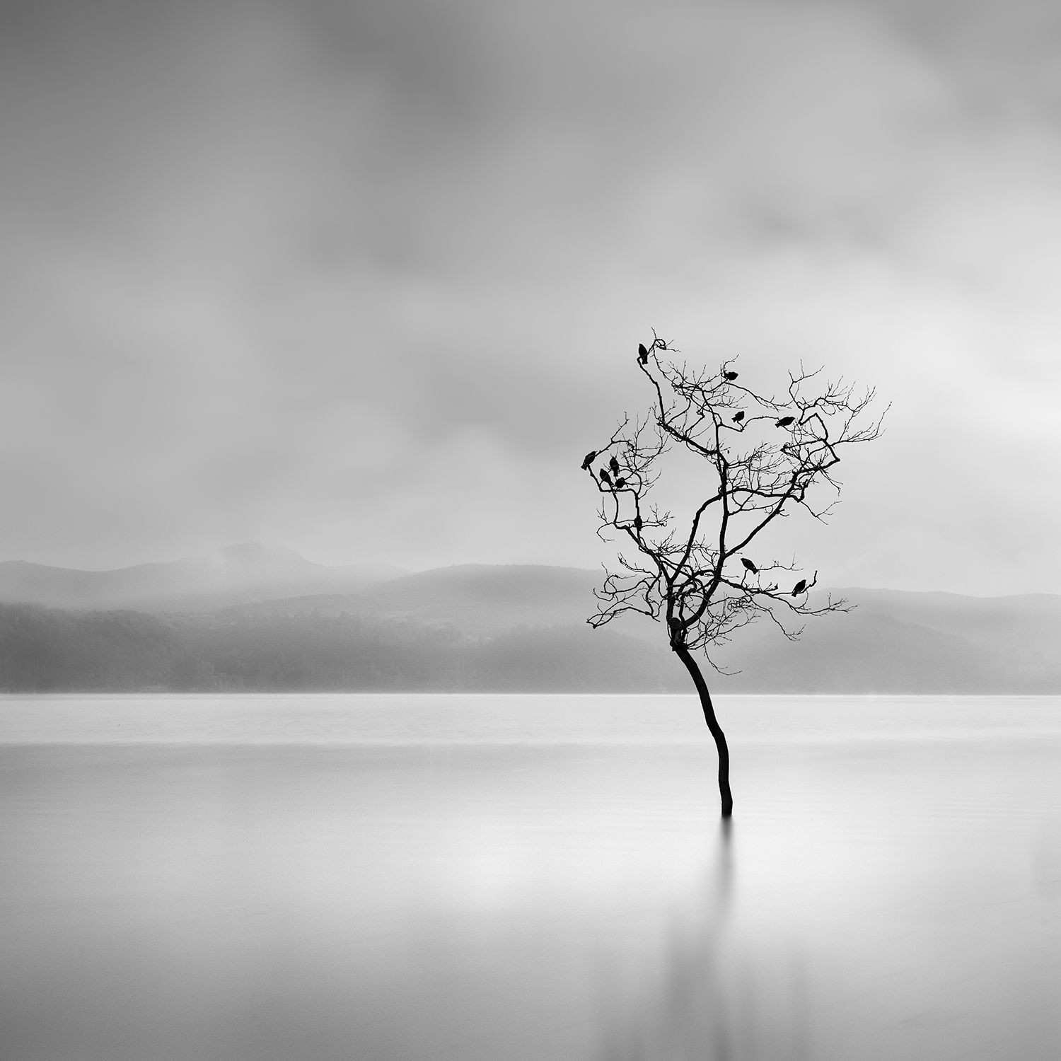 Ode To Joy George Digalakis graphy Montage