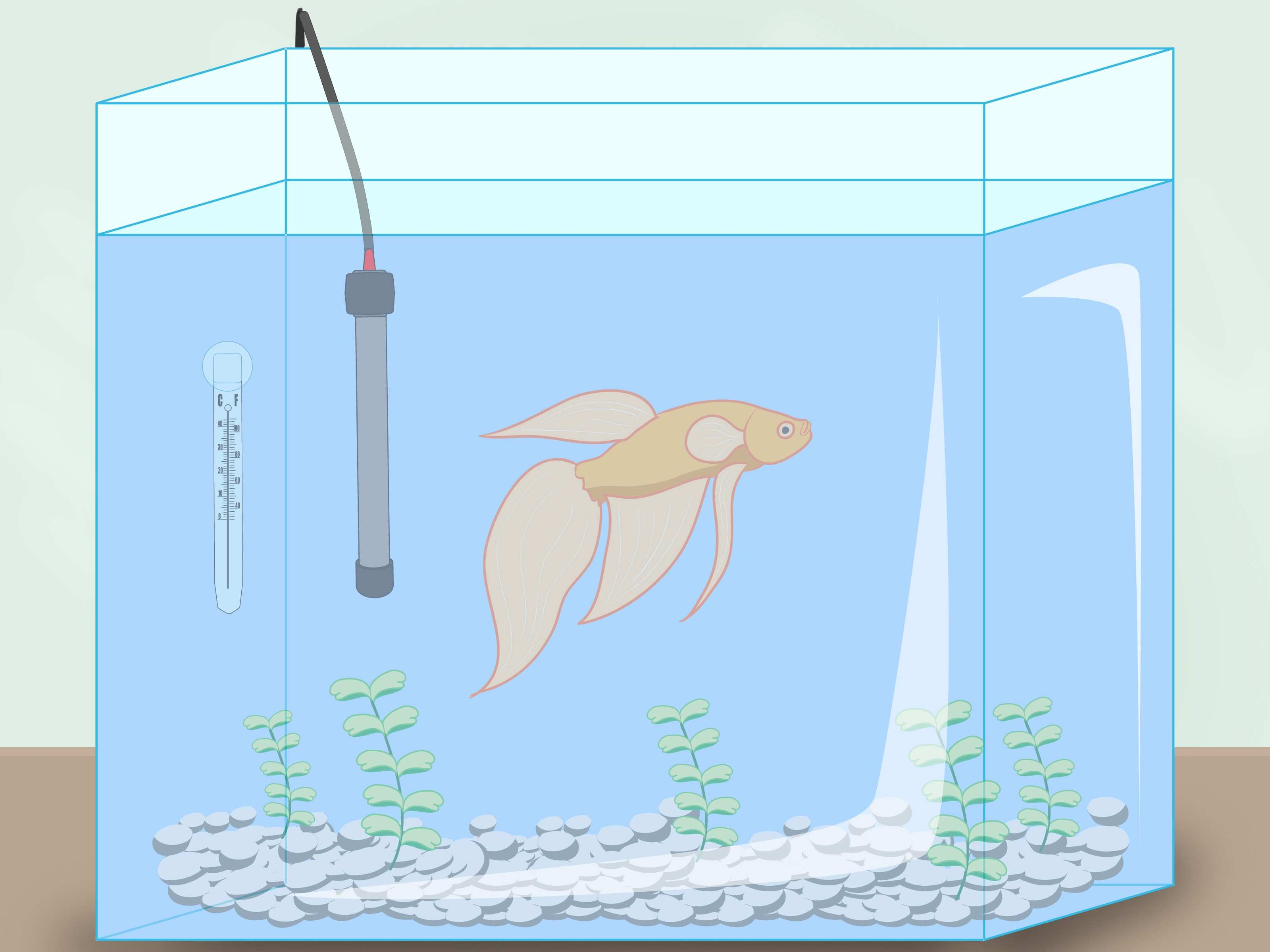 How to Clean a Betta Fish Tank 11 Steps with wikiHow
