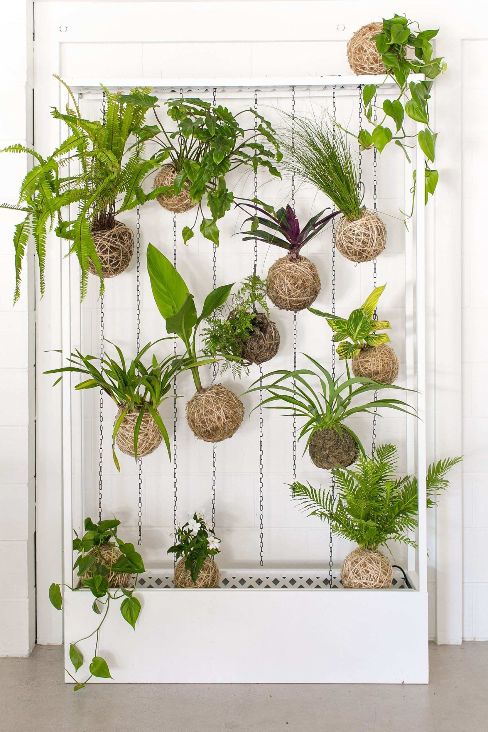 Hanging Wall Plants econhomes