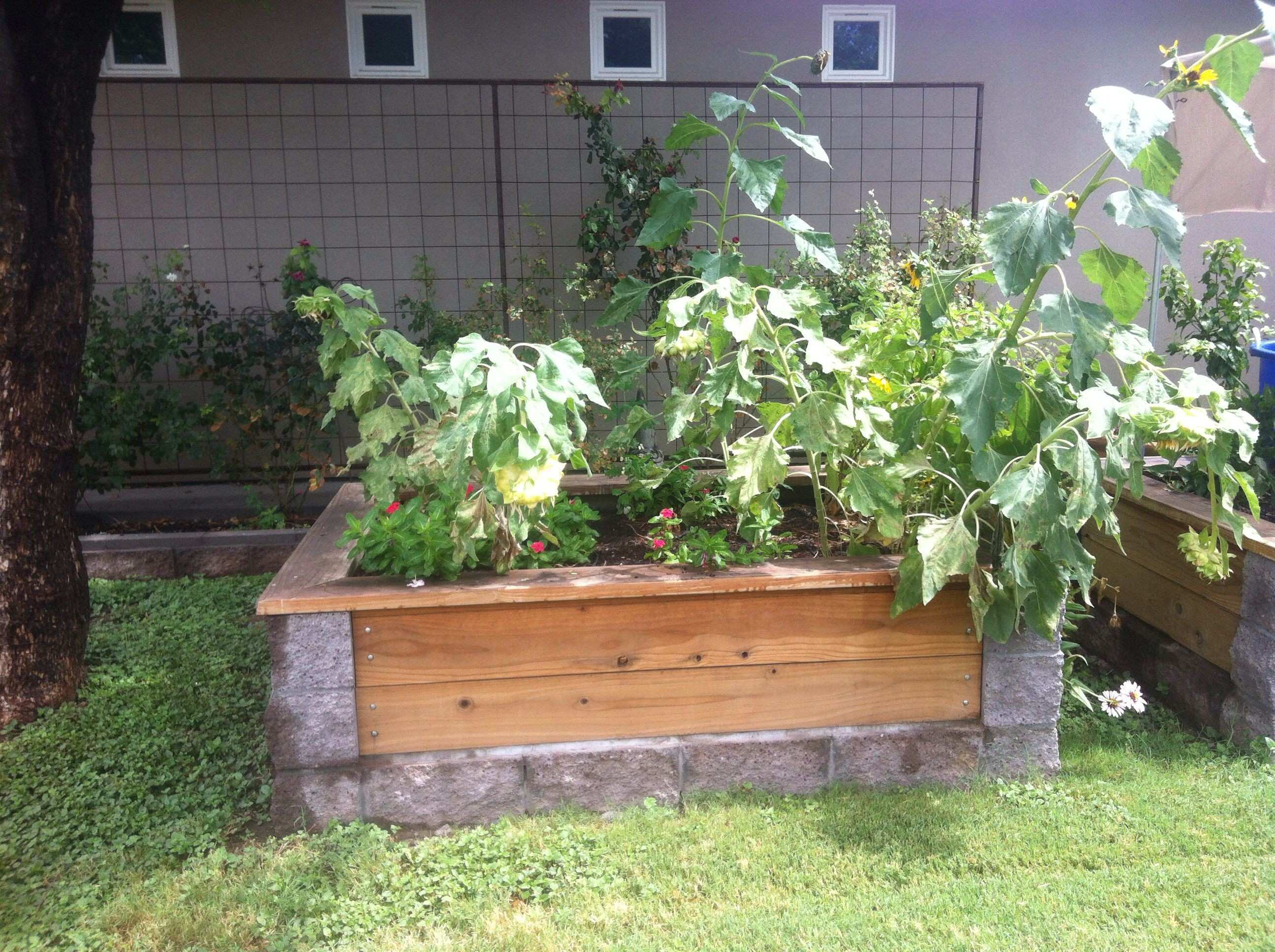 Cinder block and wood garden bed backyard heaven
