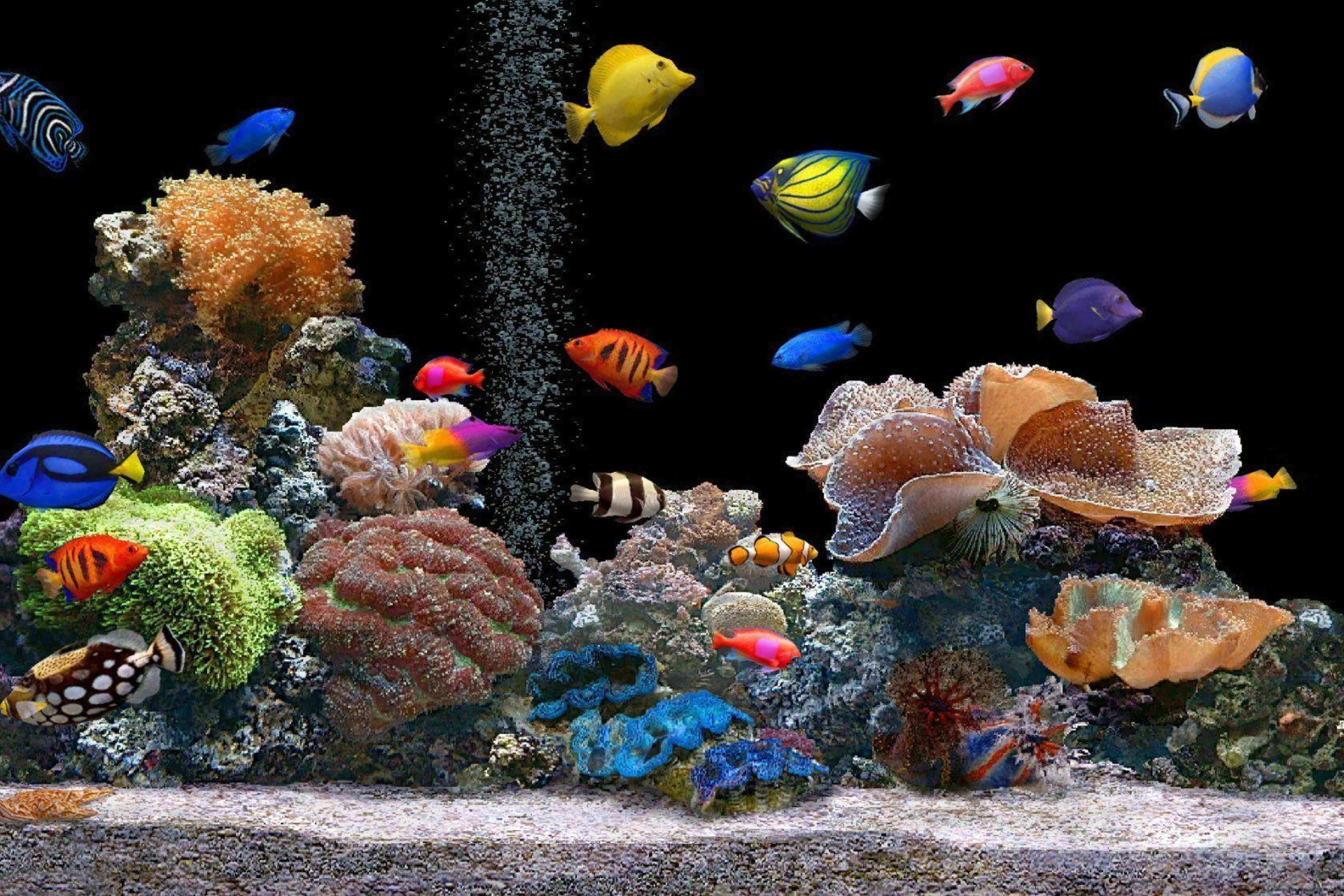 Avikalp Aquarium Fish Paper Wall Poster Without Frame Buy Avikalp