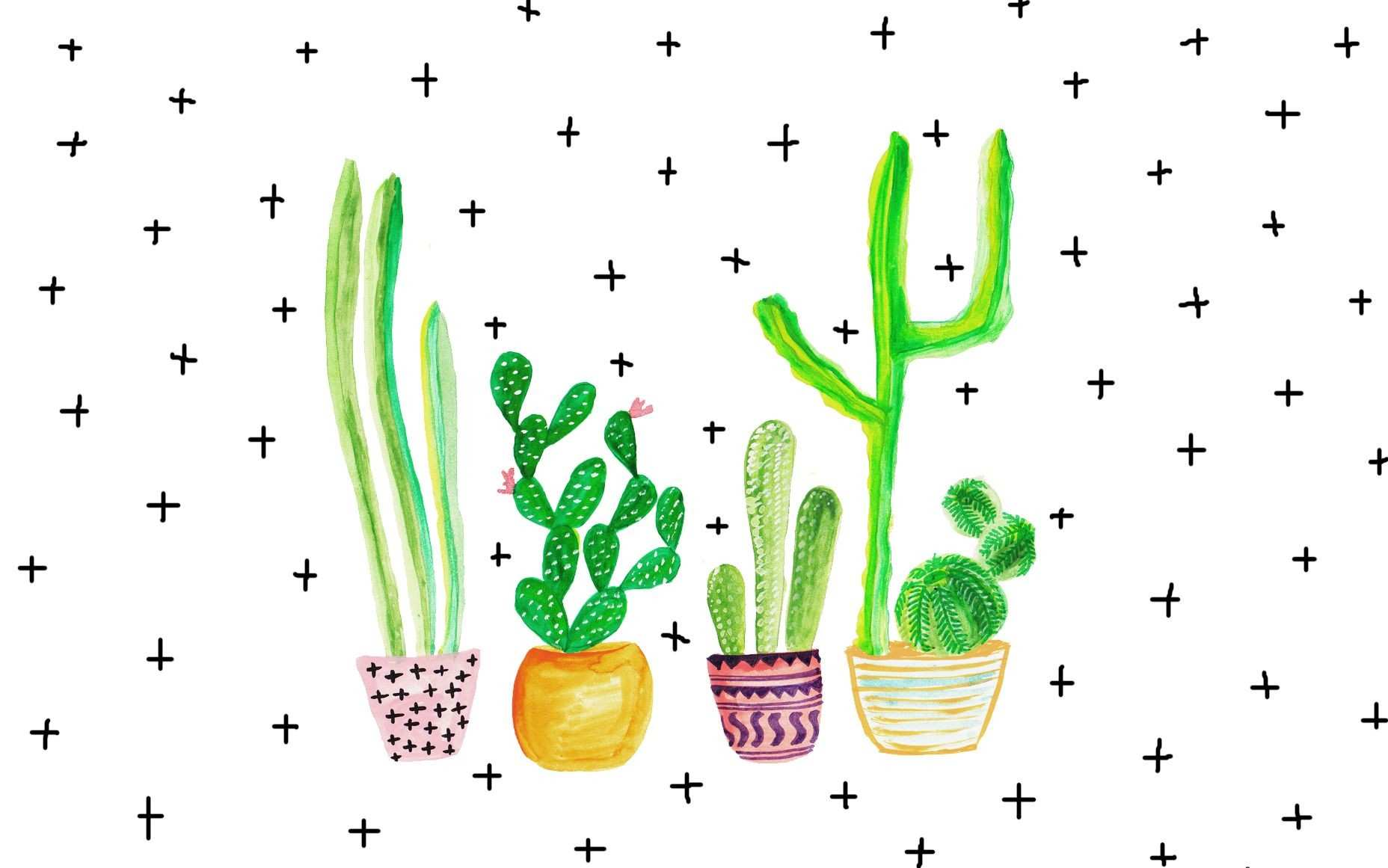 current trends cacti