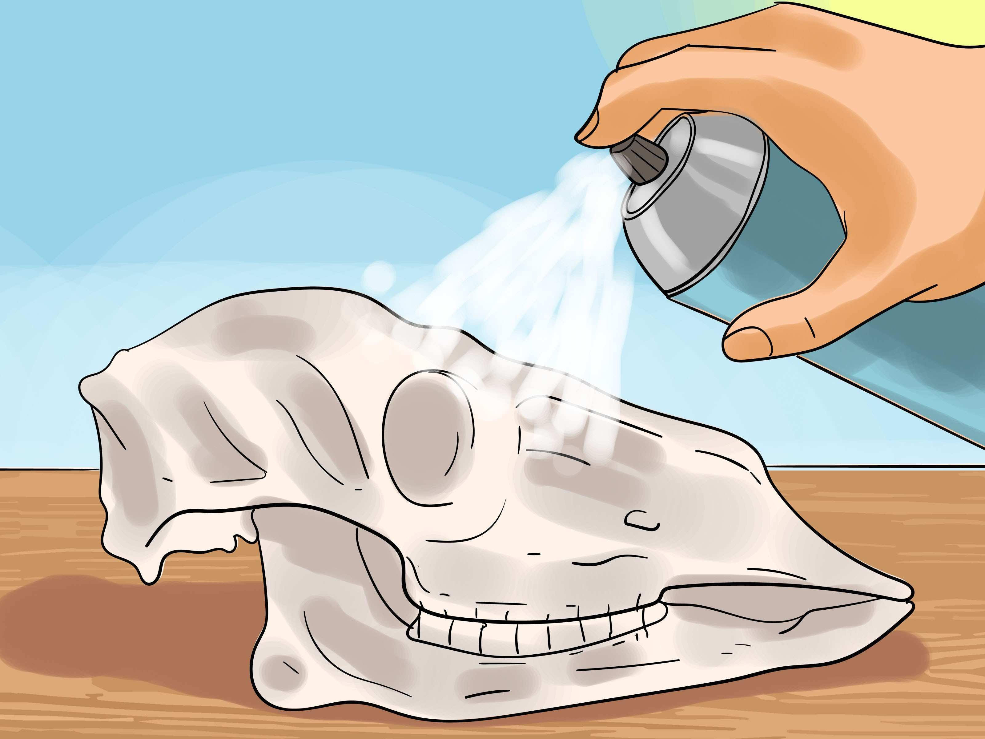 How to Preserve a Skull 9 Steps with wikiHow