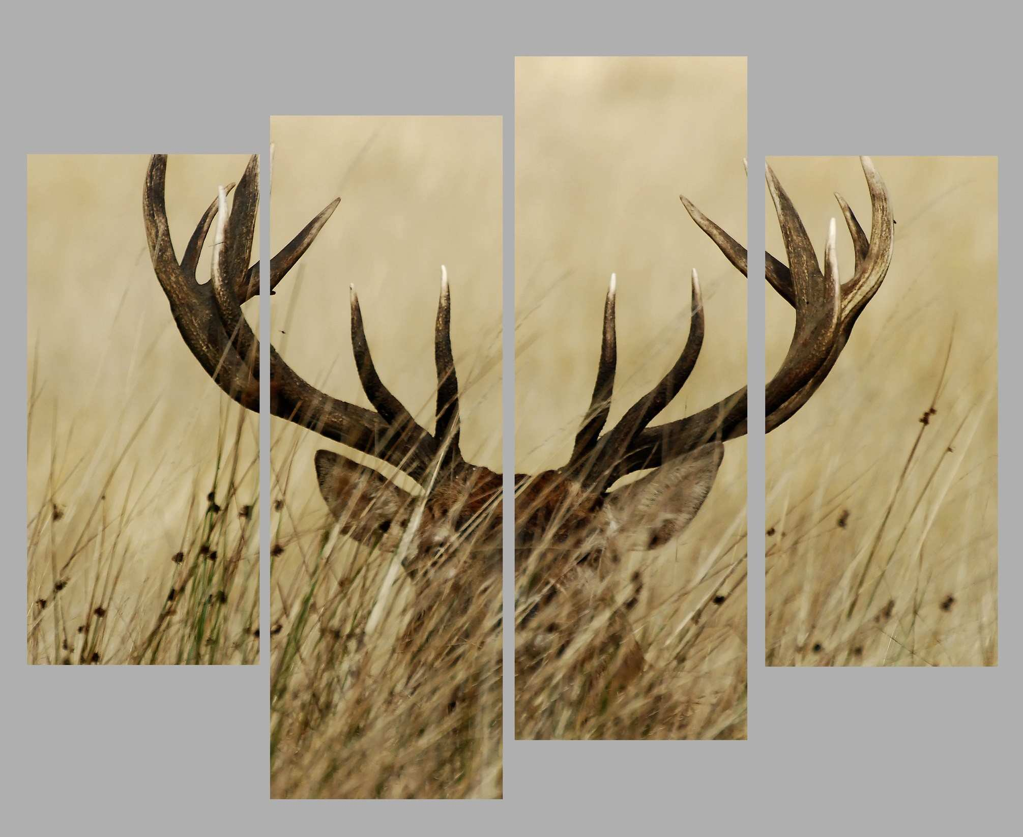 4 Panel Wall Art Canvas Prints Deer Stag With Long Antler In The