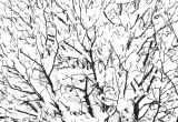 Tree Branch Art Elegant Snow Covered Tree Branches White Textures Natural Pattern