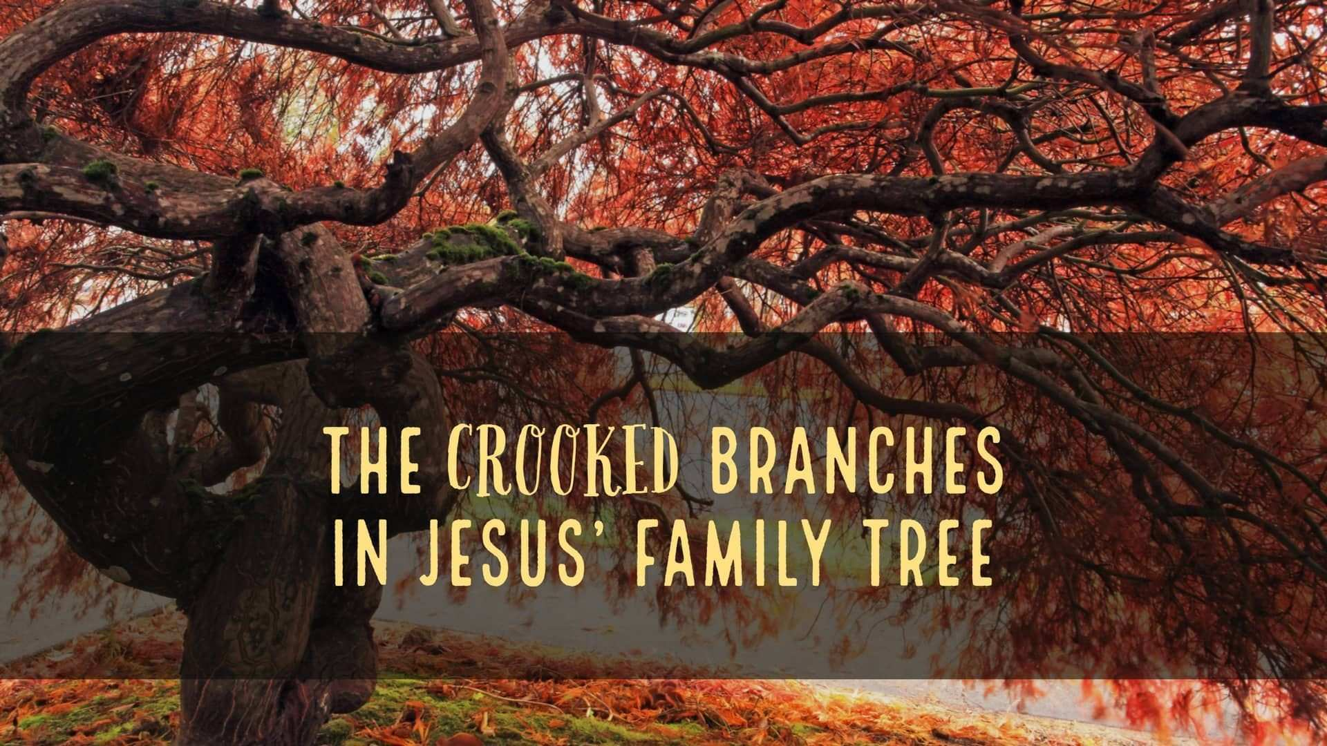 Tree Branch Art Inspirational the Crooked Branches In Jesus Family Tree On Vimeo