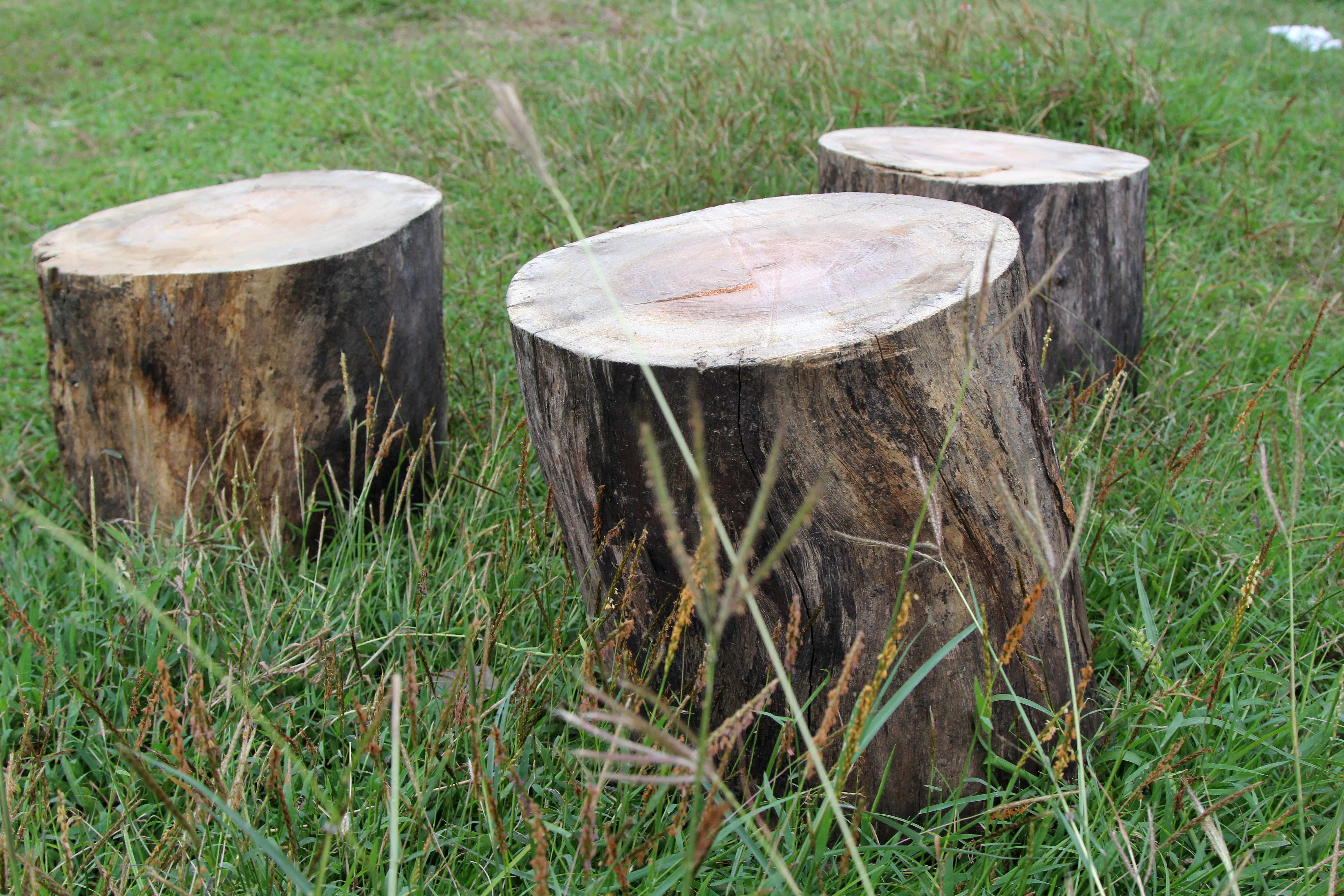 How to Make a Stool from an Old Tree Trunk 7 Steps