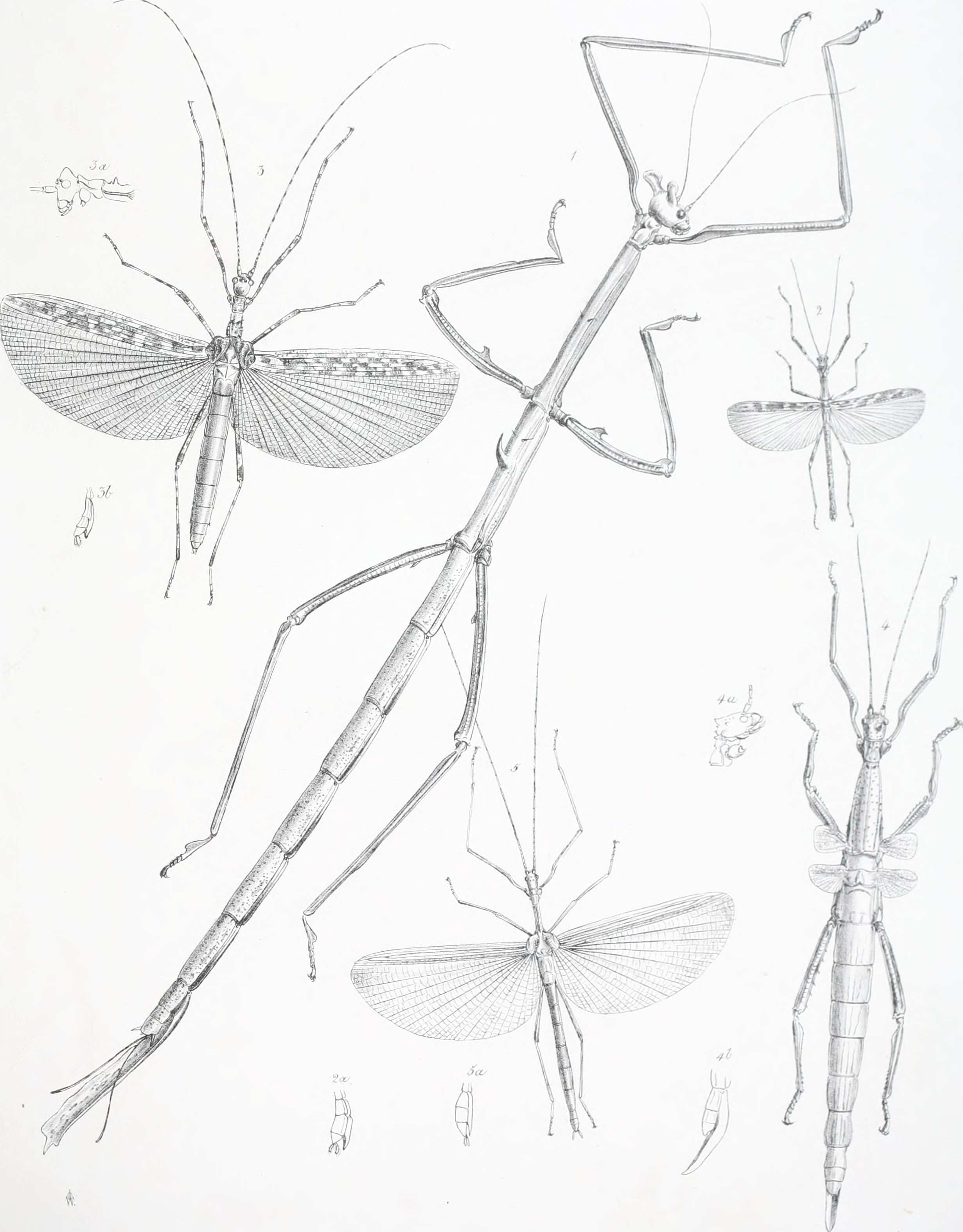File Catalogue of orthopterous insects in the collection of the
