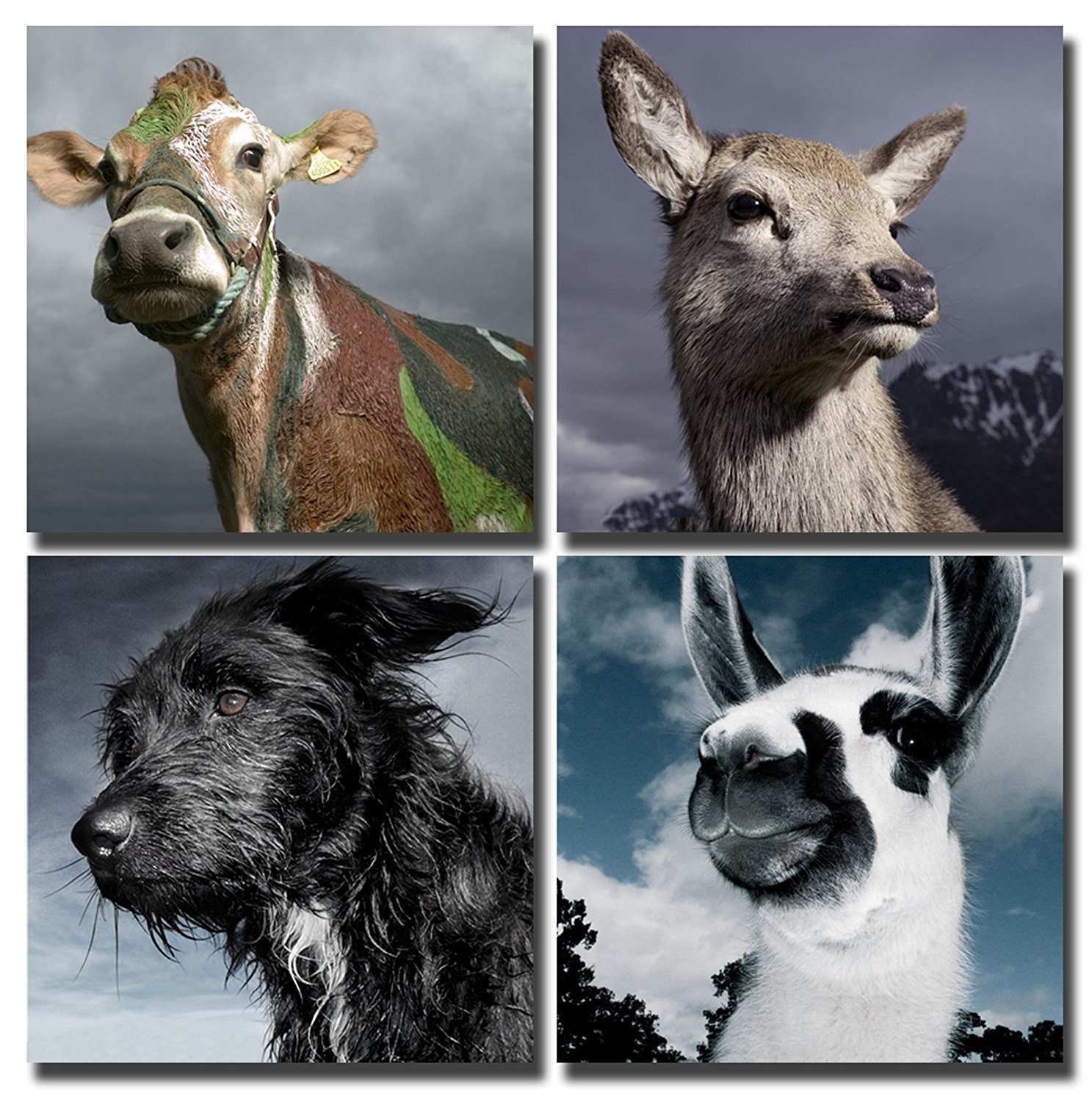 Wall Art Picture Cute Animals Dog Kangaroo Cattle & Alpaca Canvas