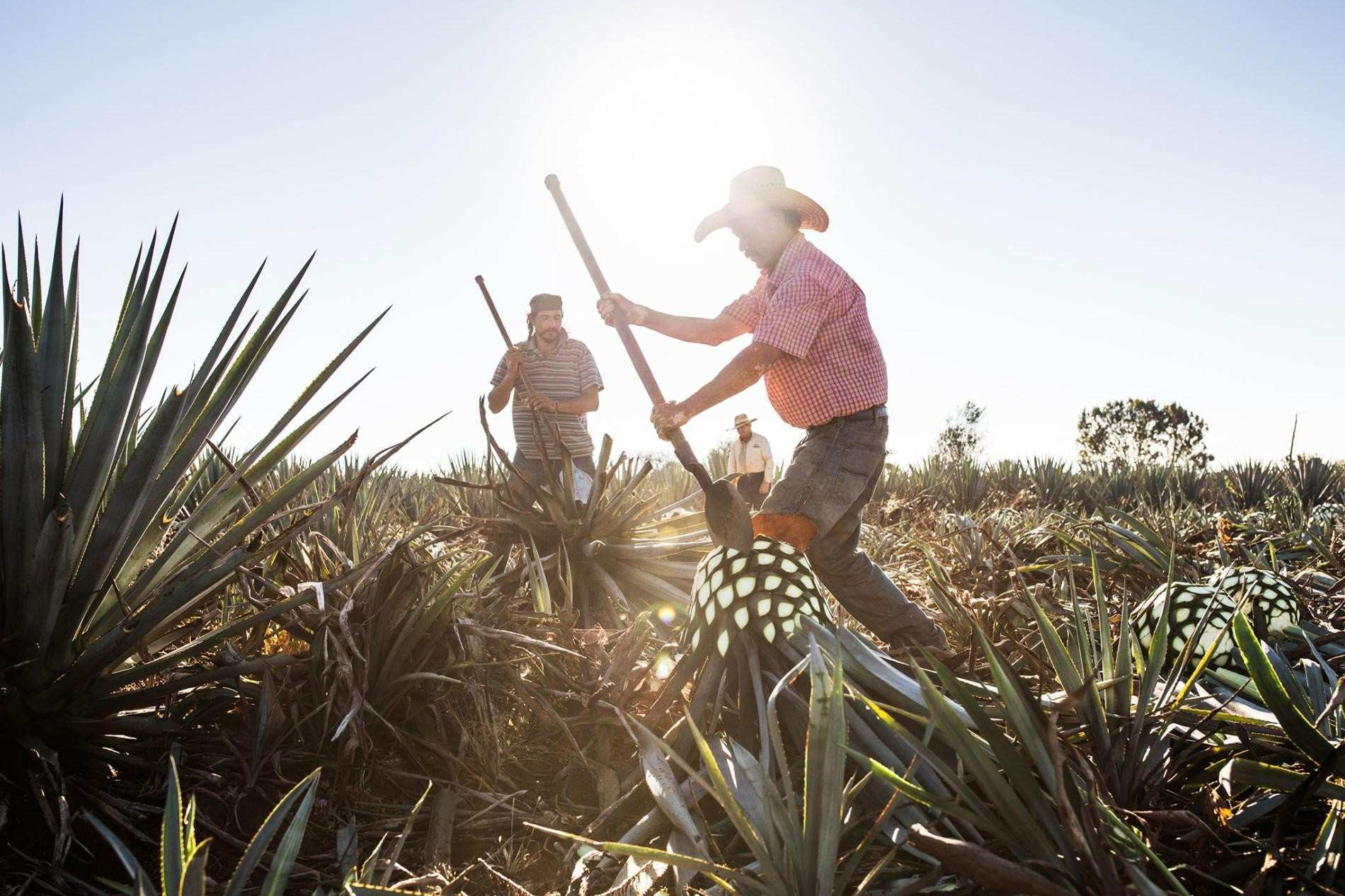 The Wild Vibrant History of Mexican Tequila